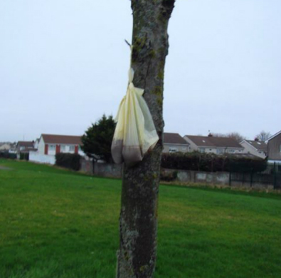 Dog faeces in a bag hanging from a tree in Sean Walsh Park